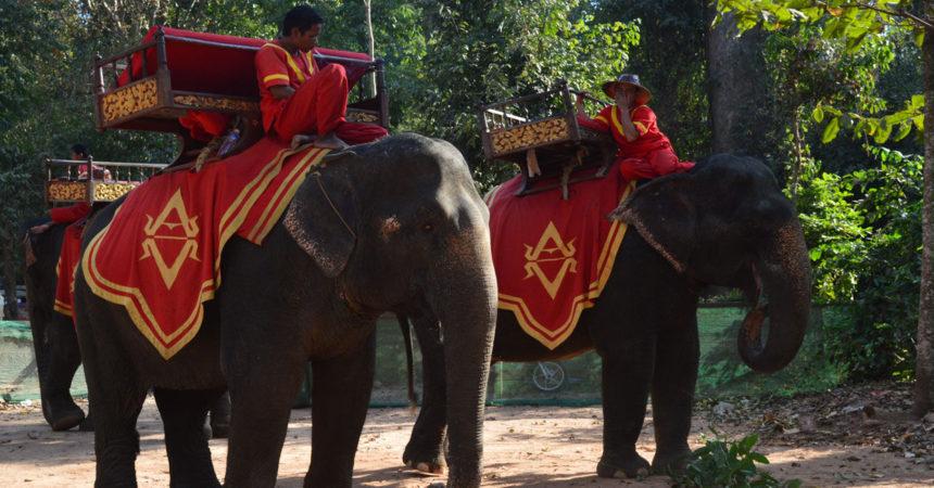 montar en elefante templos de angkor