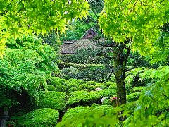Bosques de Japon