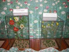 Museo del Opio